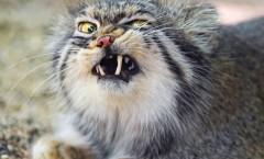 Cat_Pic